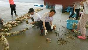南三陸町でホタテの養殖のお手伝い
